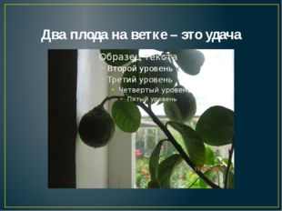 Два плода на ветке – это удача
