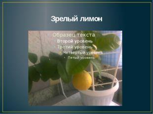Зрелый лимон