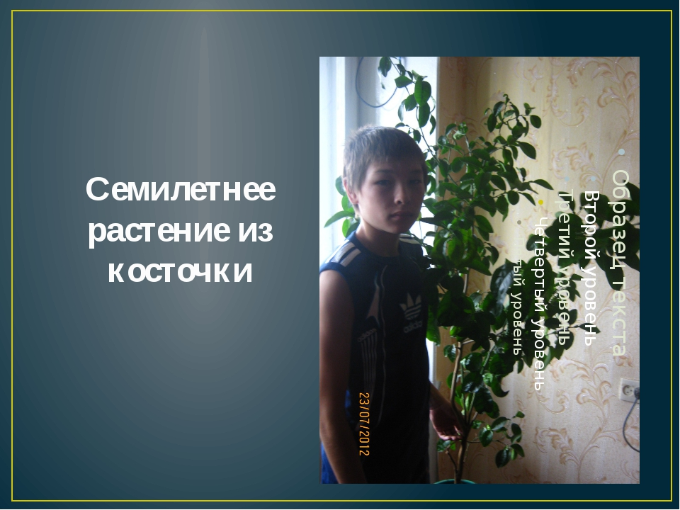 Семилетнее растение из косточки