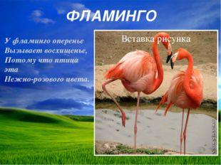 ФЛАМИНГО У фламинго оперенье Вызывает восхищенье, Потому что птица эта Нежно-
