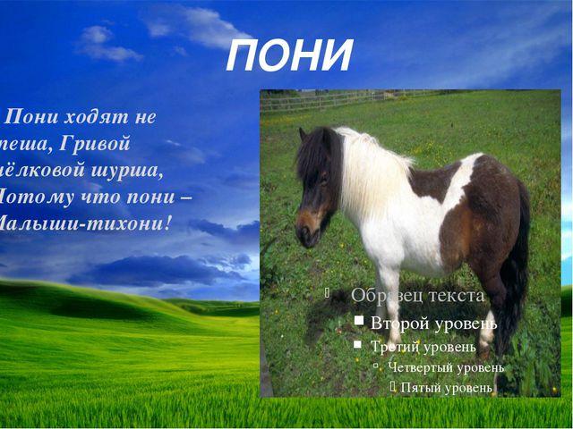 ПОНИ Пониходят не спеша, Гривой шёлковой шурша, Потому что пони – Малыши-тих...