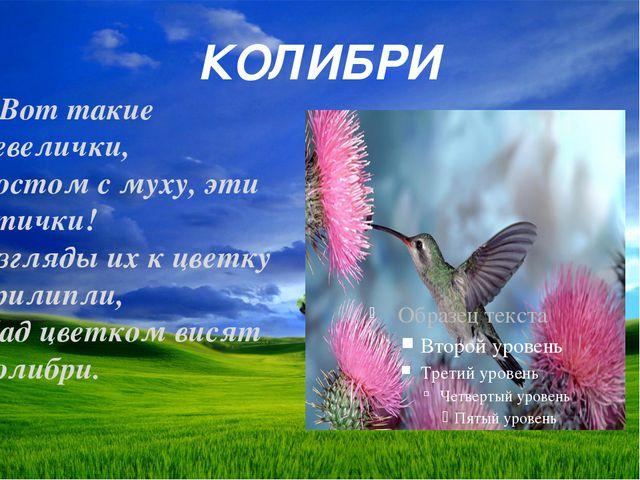 КОЛИБРИ Вот такие невелички, Ростом с муху, эти птички! Взгляды их к цветку п...