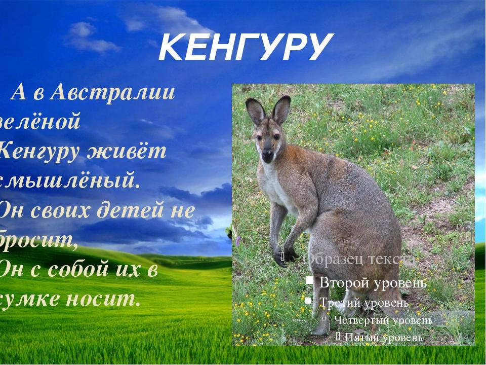 КЕНГУРУ А в Австралии зелёной Кенгуру живёт смышлёный. Он своих детей не брос...