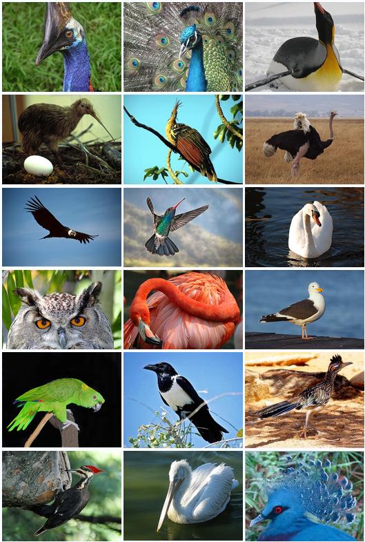 http://dic.academic.ru/pictures/wiki/files/66/Bird_Diversity_2011.png