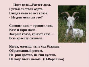 Идет коза…Растет лоза, Густой листвой одета. Глядит коза во все глаза: -