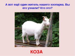 А вот ещё один житель нашего зоопарка. Вы его узнали? Кто это? КОЗА