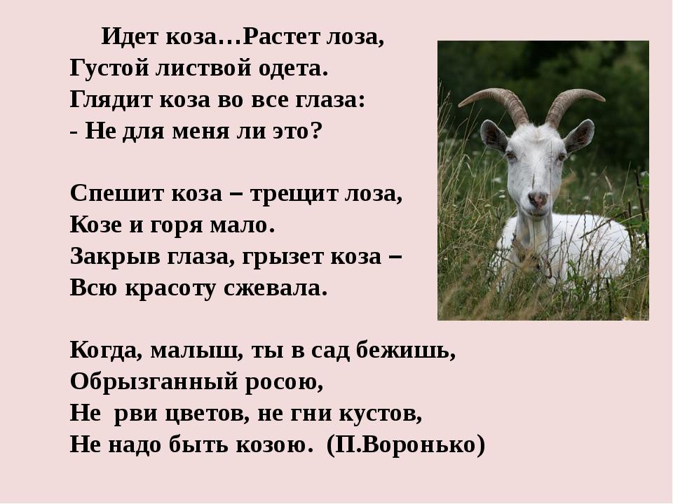 Идет коза…Растет лоза, Густой листвой одета. Глядит коза во все глаза: -...