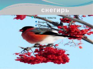 Непоседа пестрая, птица длиннохвостая, птица говорливая, самая болтливая…
