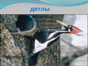 синички