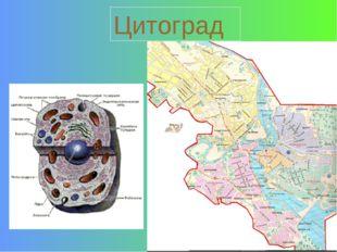 Цитоград