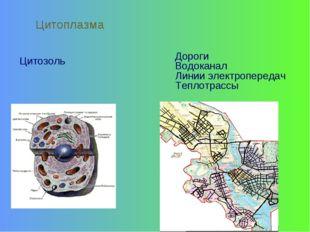Цитозоль Цитоплазма Дороги Водоканал Линии электропередач Теплотрассы