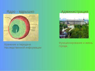 Ядро - ядрышко Администрация Хранение и передача Наследственной информации Фу