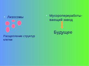 Лизосомы Мусоропереработы-вающий завод Будущее Расщепление структур клетки