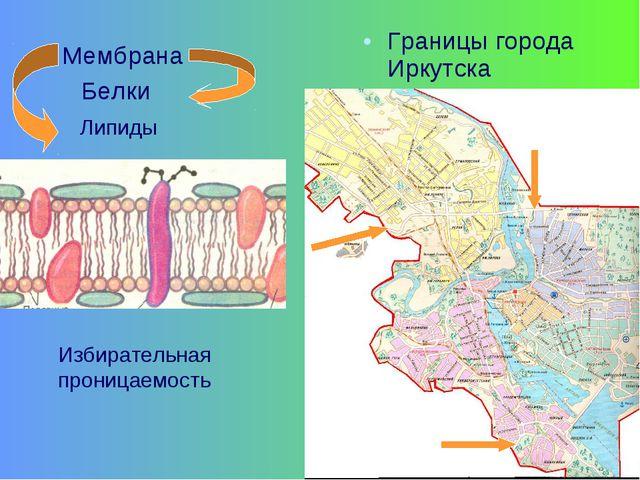Границы города Иркутска Мембрана Белки Липиды Избирательная проницаемость