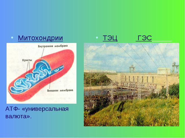Митохондрии ТЭЦ ГЭС АТФ- «универсальная валюта».