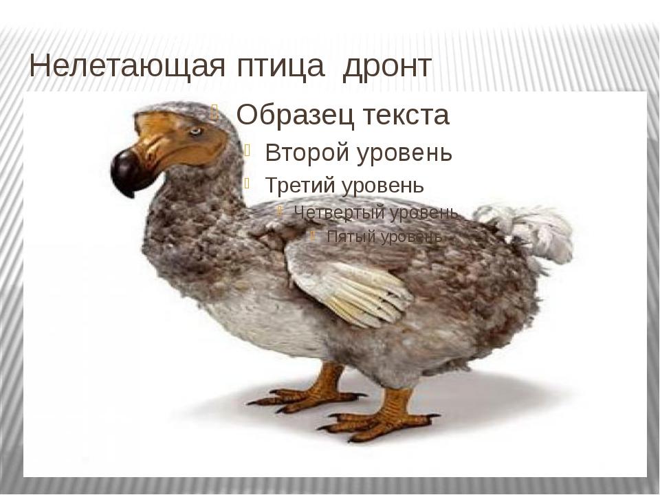 Нелетающая птица дронт