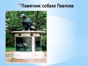 Памятник собаке Павлова Его создал в 1935г. скульптор И.Ф.Беспалов по идее ак