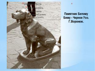 Памятник Белому Биму - Черное Ухо. Г.Воронеж. Знаменитый герой воронежского