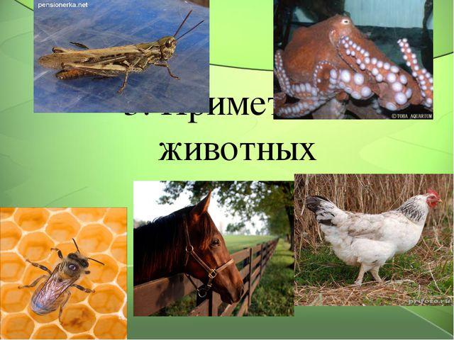 3. Приметы от животных 3 стр