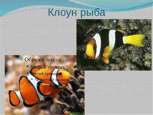Клоун рыба
