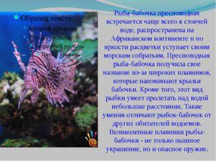 Рыба-бабочка пресноводная встречается чаще всего в стоячей воде, распростране