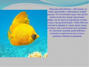 Морская рыба-бабочка - небольшая, но очень яркая рыбка, обитающая в живой п