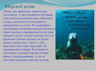 Морской котик Облик этих животных типичен для ластоногих. У них вытянутое тул