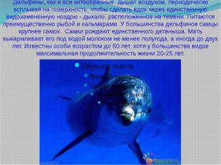 Дельфины, как и все китообразные, дышат воздухом, периодически всплывая на по