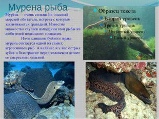 Мурена рыба Мурена — очень сильный и опасный морской обитатель, встреча с кот