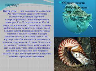 Наутилус Наути́лусы— род головоногих моллюсков. Это единственный среди совр