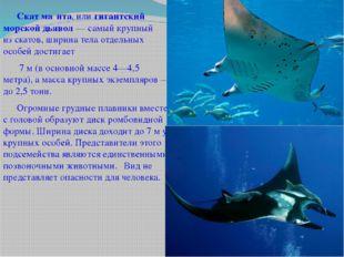 Скат ма́нта, илигигантский морской дьявол— самый крупный изскатов, ширин