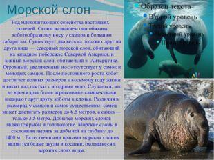 Морской слон Родмлекопитающихсемейства настоящих тюленей. Своим названием о