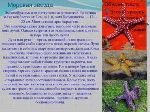 Морская звезда Звездообразные или пятиугольныеиглокожие. Величина звёзд коле