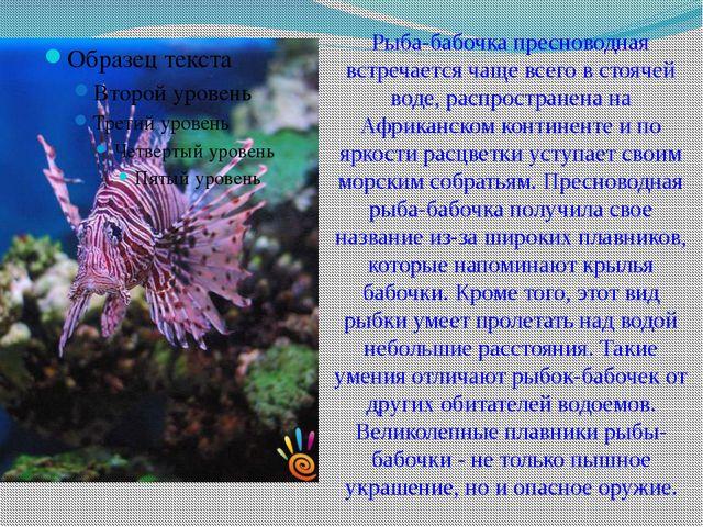 Рыба-бабочка пресноводная встречается чаще всего в стоячей воде, распростране...