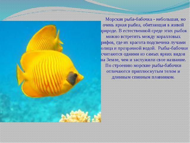 Морская рыба-бабочка - небольшая, но очень яркая рыбка, обитающая в живой п...