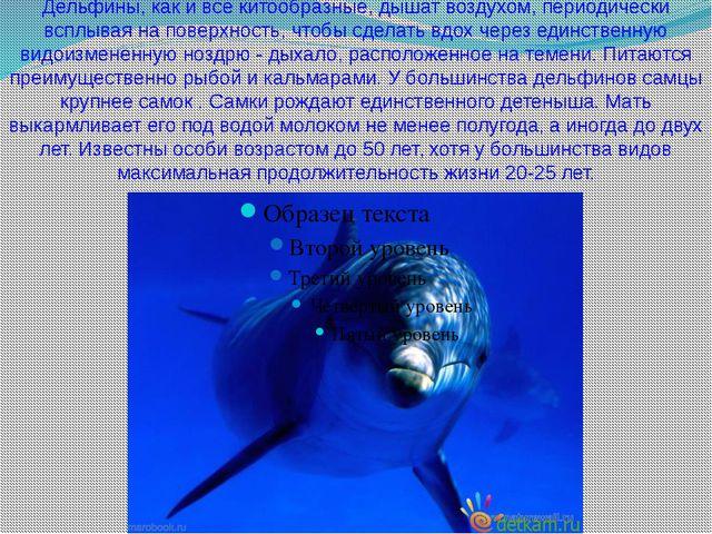 Дельфины, как и все китообразные, дышат воздухом, периодически всплывая на по...