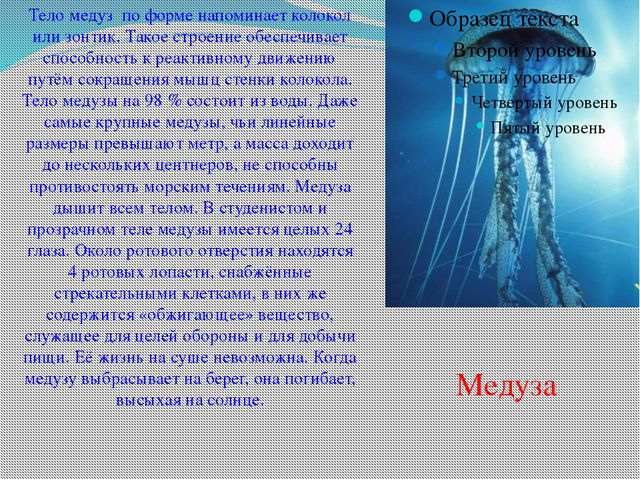 Тело медуз по форме напоминает колокол или зонтик. Такое строение обеспечивае...