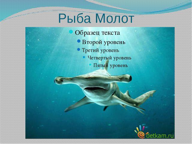 Рыба Молот