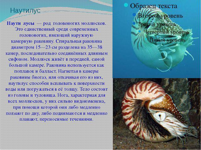 Наутилус Наути́лусы— род головоногих моллюсков. Это единственный среди совр...