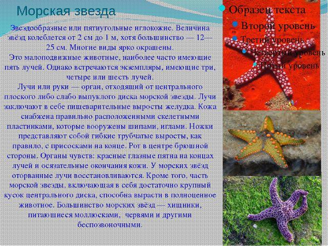 Морская звезда Звездообразные или пятиугольныеиглокожие. Величина звёзд коле...