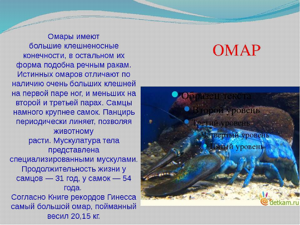 Омары имеют большиеклешненосные конечности, в остальном их форма подобнареч...