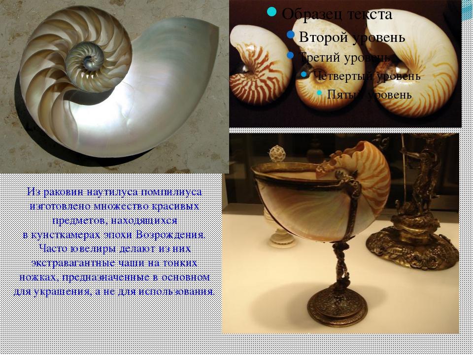 Из раковин наутилуса помпилиуса изготовлено множество красивых предметов, на...