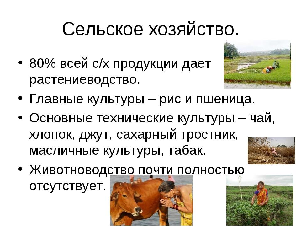 Сельское хозяйство. 80% всей с/х продукции дает растениеводство. Главные куль...