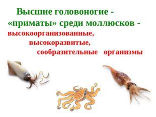 Высшие головоногие - «приматы» среди моллюсков - высокоорганизованные, высок