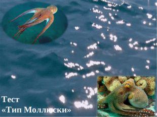 Тест «Тип Моллюски»