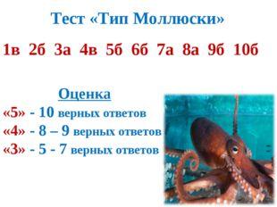Тест «Тип Моллюски» 1в 2б 3а 4в 5б 6б 7а 8а 9б 10б Оценка «5» - 10 верных отв