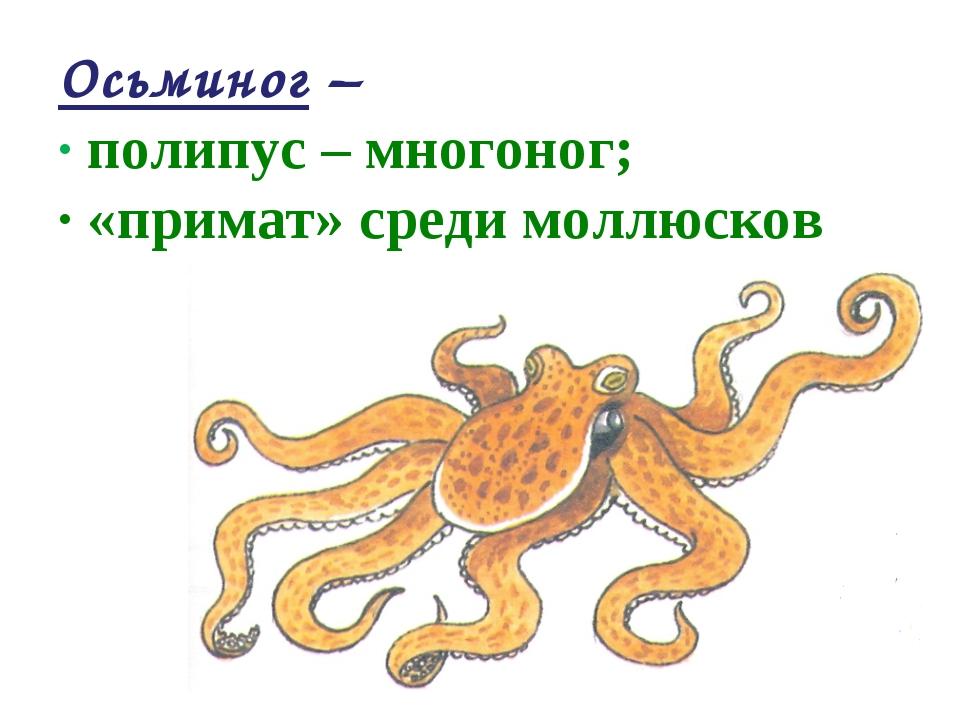 Осьминог – · полипус – многоног; · «примат» среди моллюсков