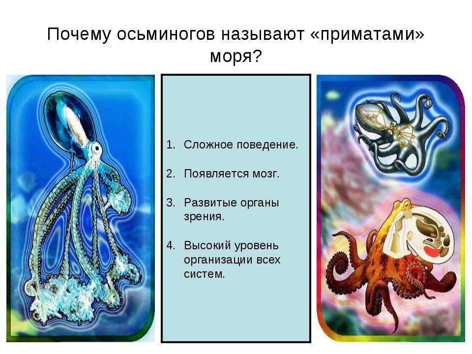 Почему осьминогов называют «приматами» моря? Сложное поведение. Появляется мо...