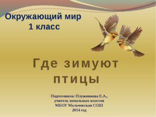 Окружающий мир 1 класс Где зимуют птицы Подготовила: Плужникова Е.А., учитель