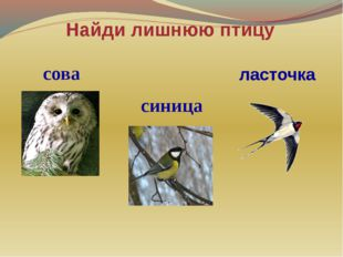 Найди лишнюю птицу сова синица ласточка